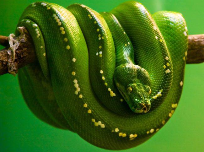 змея, ваше тотемное животное