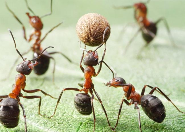 муравей тотемное животное